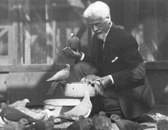 Charles Otis Whitman and pigeons.